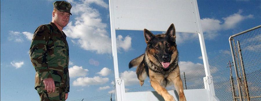אילוף כלבים - כמה דברים חשובים