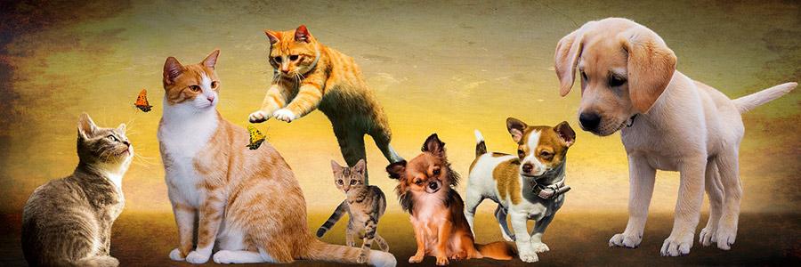 איזו חיית מחמד הכי מתאימה לי, כלב או חתול (או תוכי)?